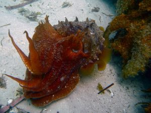 Sea creatures at Booderee National Park