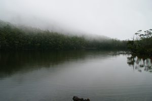 Foggy river at Mt Field, Tasmania