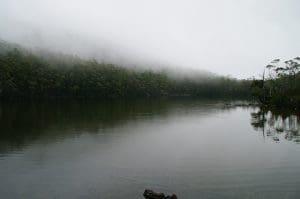 Foggy river at Mt Field, Tasmania