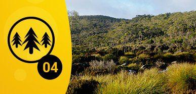 Best Tall Tree Camping – Mt Field National Park, Tas
