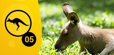 Best place to witness Aussie critters – Noah Beach, Cape Tribulation, Daintree National Park, Qld
